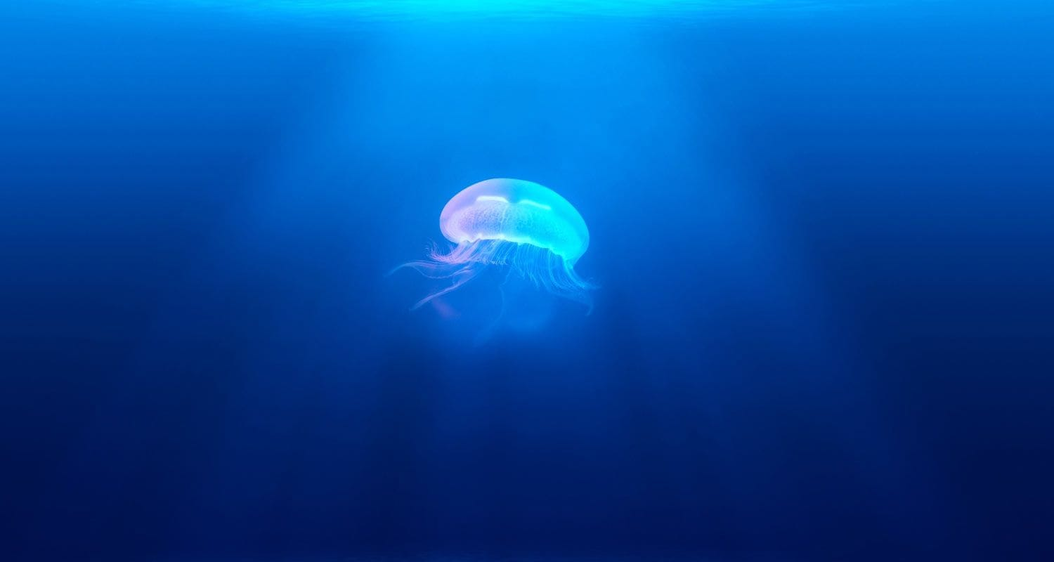 Jellyfish medical findings 2